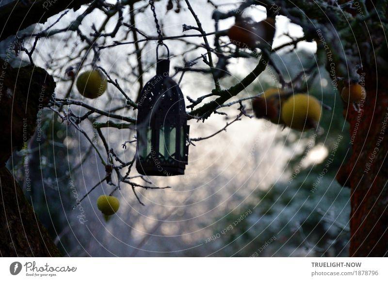 Am 21.Dezember ist Wintersonnenwende Himmel Natur alt grün weiß Baum ruhig dunkel schwarz gelb Lifestyle Glück Tod Garten grau