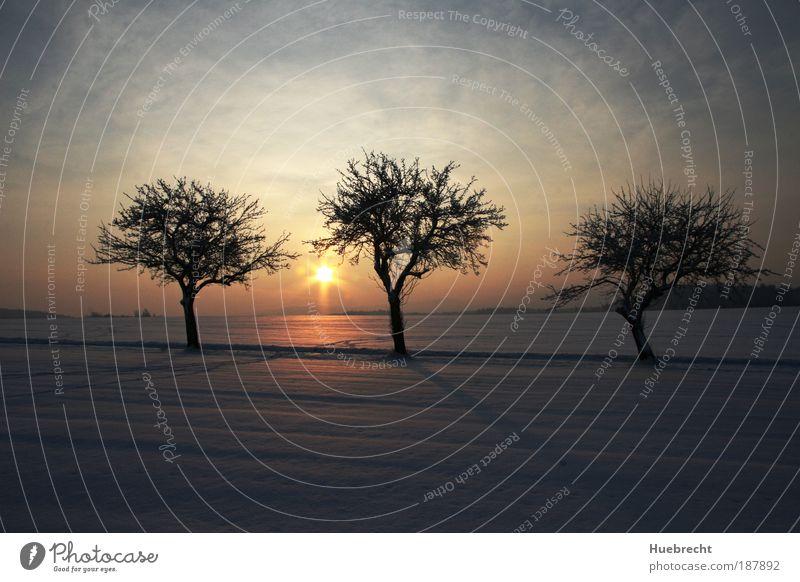 Winterlandschaft Himmel Natur Wasser Baum Pflanze Winter Sachsen kalt Schnee Freiheit Landschaft Umwelt Sonnenuntergang Sonnenaufgang Wärme Stimmung