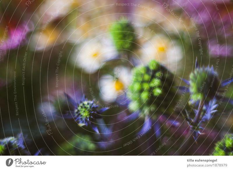 * Pflanze Blume Sträucher Blatt Blüte Grünpflanze Blumenstrauß Blühend dunkel schön natürlich stachelig trocken wild mehrfarbig Idylle Natur Stil Umwelt Distel