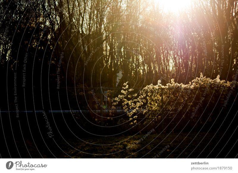 Gegenlicht am Morgen Licht grell hell Sonne Sonnenaufgang Wald Baum Baumstamm Ast Natur Park Hecke Zaun Nachbar Gleise Eisenbahn Verkehr Kontrast Textfreiraum