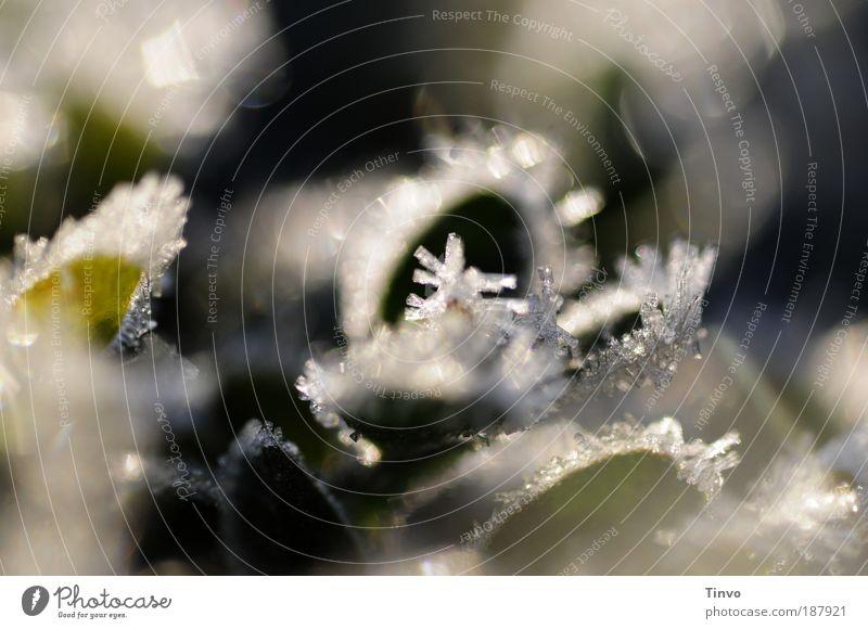 winter reflections Natur Winter Klima Schönes Wetter Eis Frost Pflanze Sträucher Blatt Grünpflanze Park frieren glänzend glitzern Buchsbaum klein zart kalt