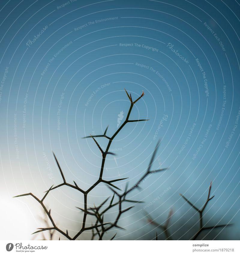 Dornenbusch Gesundheit Ferien & Urlaub & Reisen Umwelt Natur Pflanze Himmel Sonne Kaktus Wildpflanze exotisch Feld Zeichen Risiko stachelig Spitze gefährlich