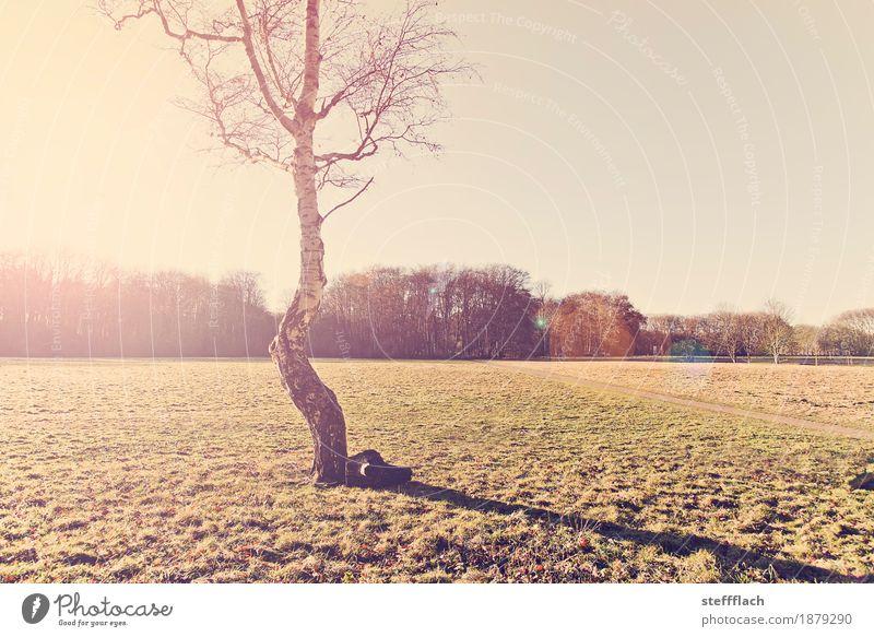 Einsame Birke Himmel Natur grün Baum Landschaft Erholung Einsamkeit ruhig Wald Umwelt Wärme Herbst Wiese natürlich Holz braun