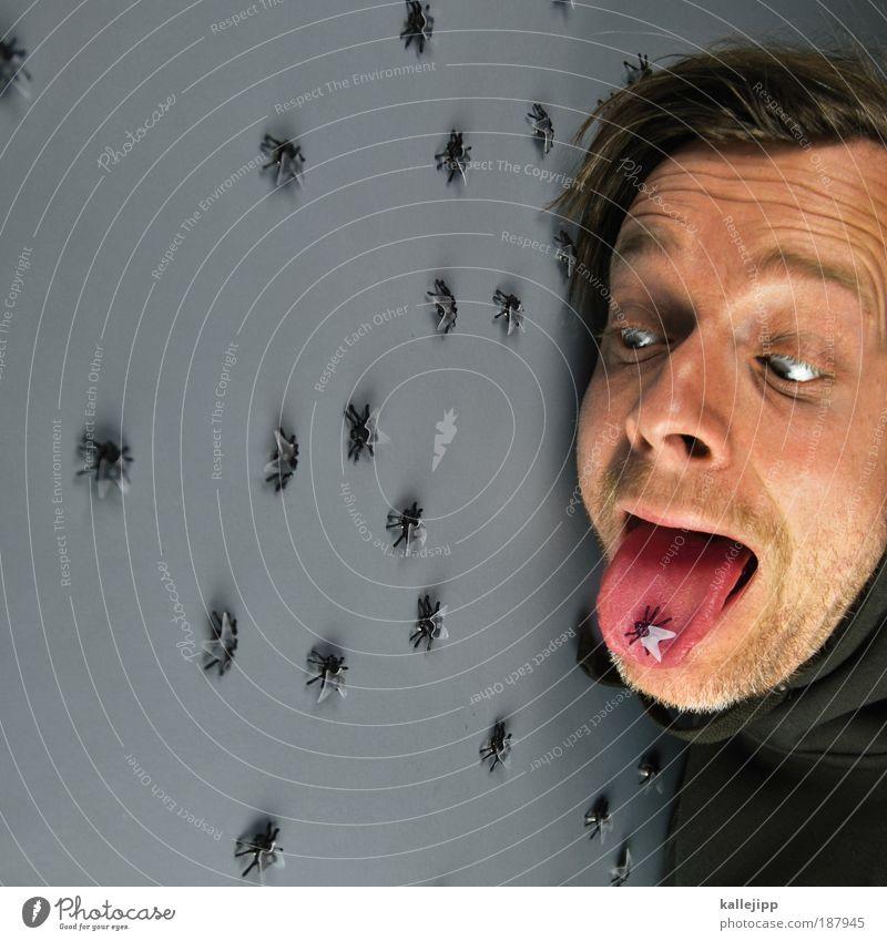 fastfood Ernährung Essen Bioprodukte Mensch Mann Erwachsene Haut Kopf Haare & Frisuren Gesicht Auge Nase Mund Lippen Bart 1 30-45 Jahre Tier Fliege Tiergruppe