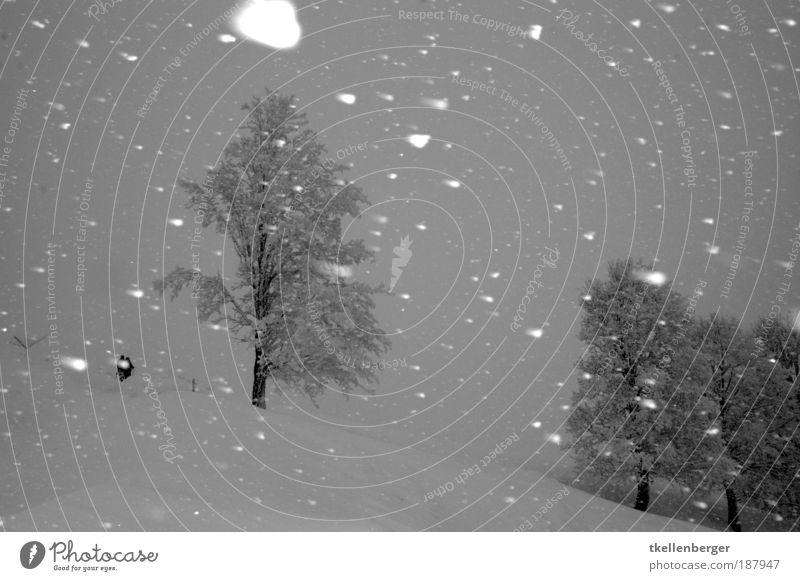 stürmisch geblitzt Natur Ferien & Urlaub & Reisen weiß Baum Winter Wolken schwarz Umwelt Landschaft kalt Berge u. Gebirge Schnee grau Schneefall Eis Klima