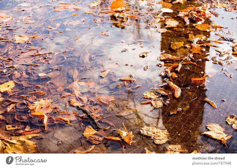 HERBST Umwelt Natur Landschaft Pflanze Himmel Wolken Herbst Wetter Schönes Wetter Regen Baum Blatt Park Wiese schön nass ruhig Herbstfärbung Herbstlaub fallen