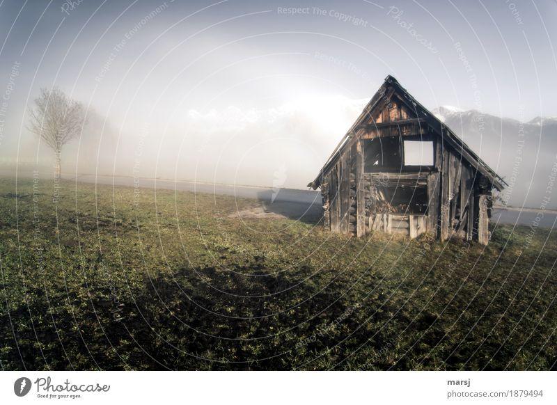 Eine von zwei Natur alt Landschaft Traurigkeit Herbst Wiese Nebel Schönes Wetter Vergänglichkeit Hütte Verfall Heuschober