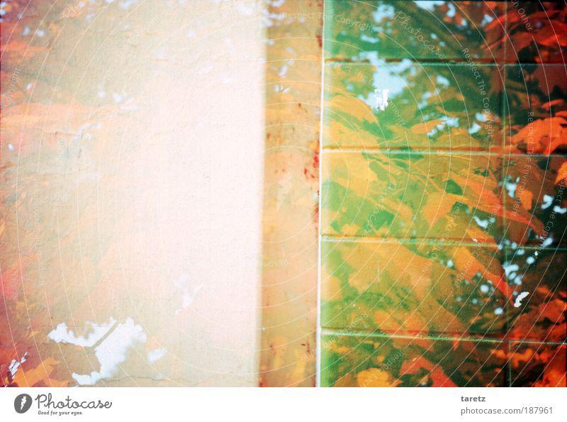 Und hinter der Wand ist der Wald schön rot Blatt Wand Mauer Ecke Lomografie geheimnisvoll Surrealismus Doppelbelichtung eckig Herbstlaub herbstlich Blätterdach