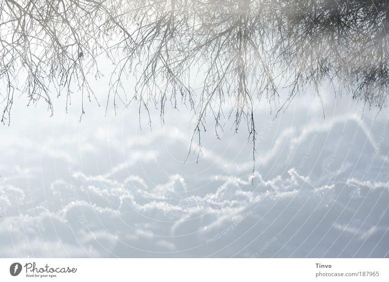winter reflections 2 Natur Winter ruhig Umwelt Schnee hell Eis Zufriedenheit Klima Urelemente Frost Sträucher Schönes Wetter Wolken Textfreiraum Doppelbelichtung