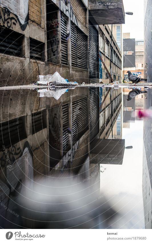 Taube trifft Pfütze alt Stadt Wasser Haus Tier Wand Mauer Vogel Fassade Stadtleben Ausflug Wildtier trist authentisch Abenteuer Altstadt