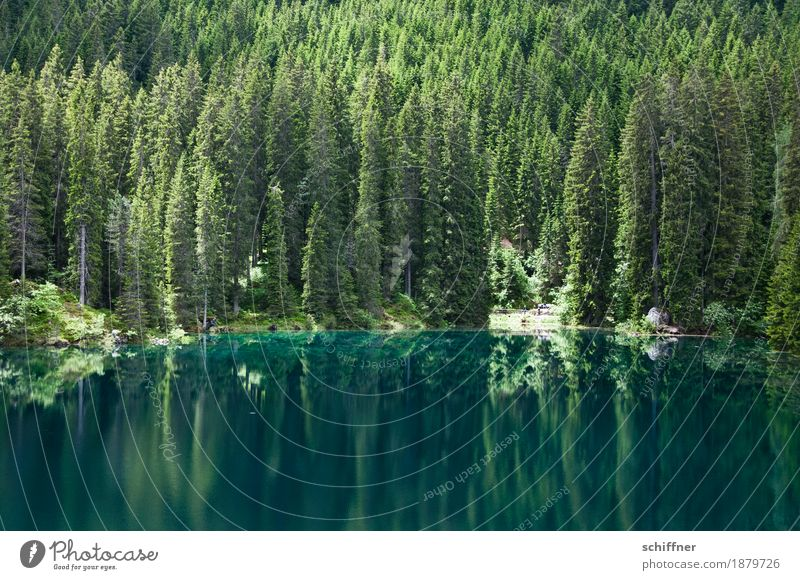 Grün ist die Hoffnung... Umwelt Natur Landschaft Pflanze Baum Wald Seeufer grün Reflexion & Spiegelung Spiegelbild Nadelbaum Nadelwald Außenaufnahme