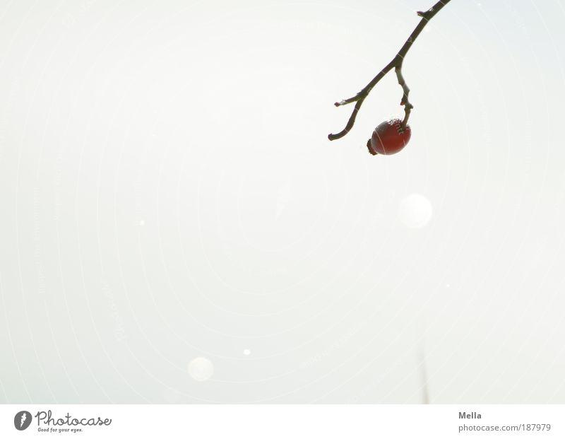 Weiß Natur weiß Pflanze Winter ruhig kalt See Eis hell glänzend Umwelt Rose Frost Klima Licht rein