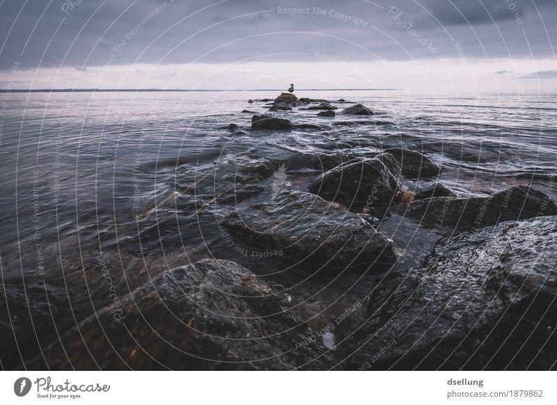 türsteher. Natur Sommer Wasser Landschaft Meer Einsamkeit Tier ruhig Winter dunkel Umwelt kalt Herbst Frühling Küste grau