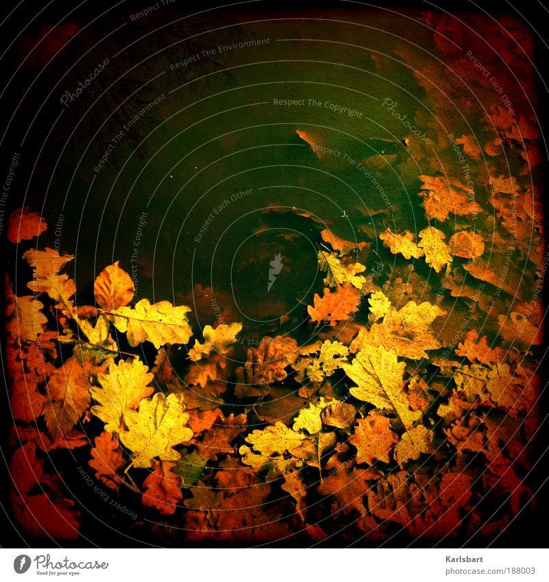 farbensaft. Himmel Natur Wasser Farbe Blatt Einsamkeit Umwelt Herbst Freiheit nass Design verrückt Lifestyle Ast skurril Angeln