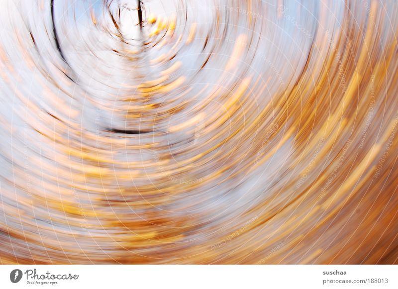 nachher gehts rund .. Natur schön Himmel Baum Wald Bewegung Holz Landschaft Wind Wetter Umwelt Geschwindigkeit Unschärfe Klima Ast Apfel