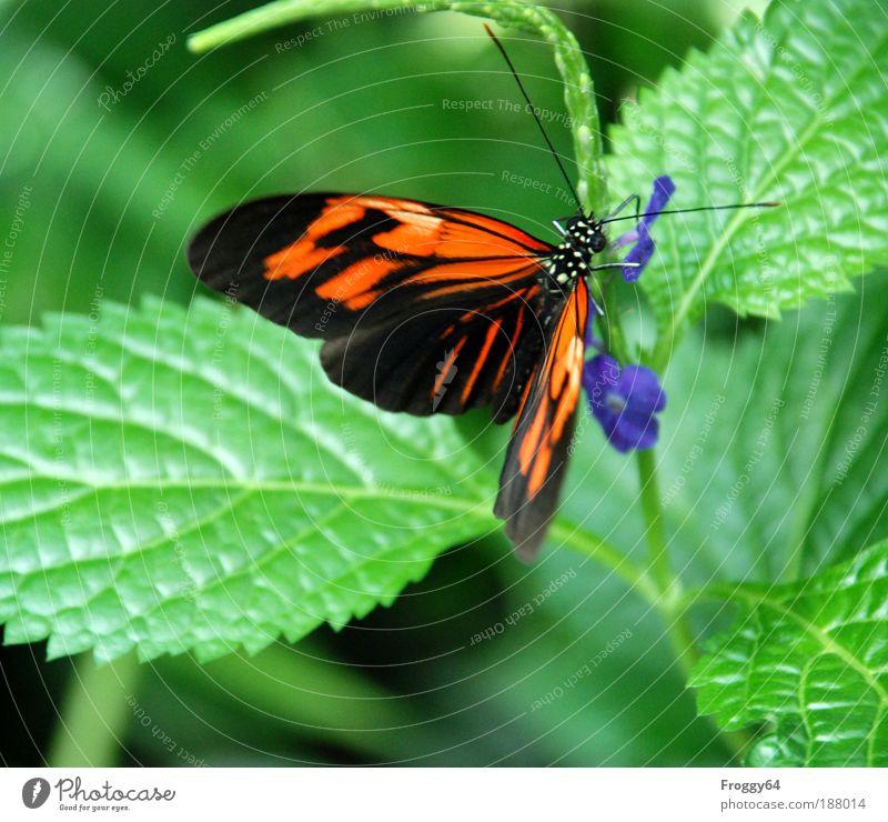 Alles Gute im Neuen Jahr! Natur grün blau Pflanze Blatt Tier Blüte träumen Landschaft braun Kunst Umwelt Ziel Sympathie verblüht Grünpflanze
