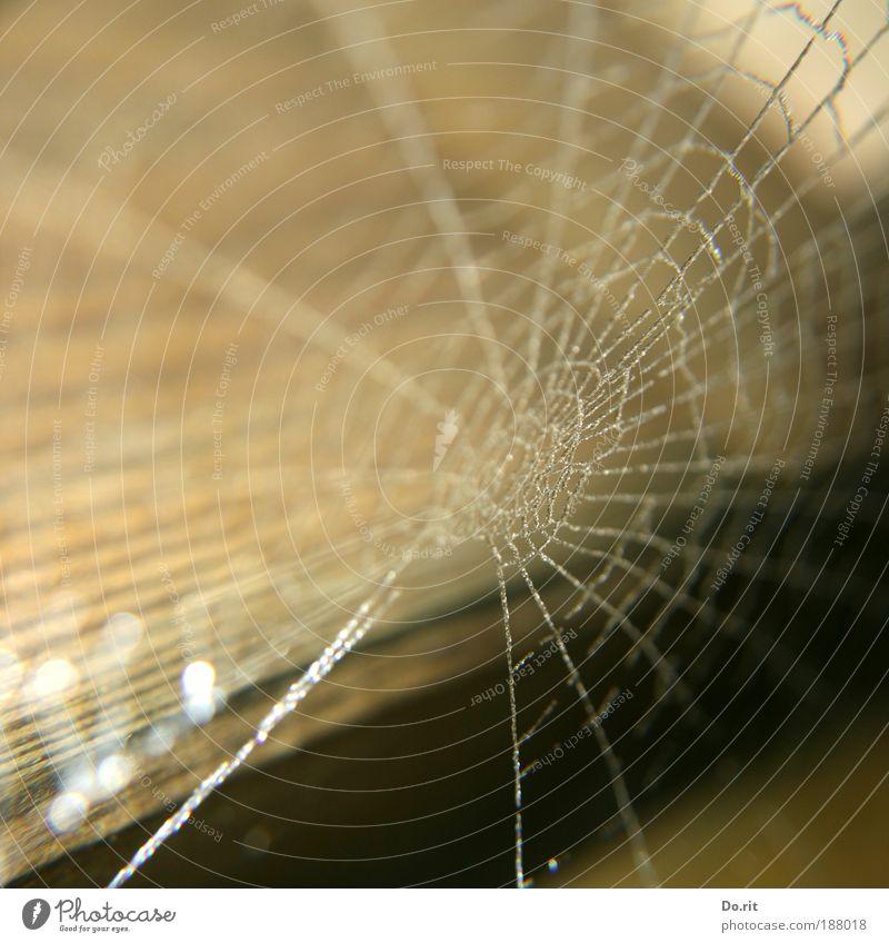 Frohes neues Jahr... Natur Haus Holz Regen Kunst Umwelt Wassertropfen Netzwerk Kultur Dekoration & Verzierung gefroren Umzug (Wohnungswechsel) Loch gefangen Spinne Zusammenhalt