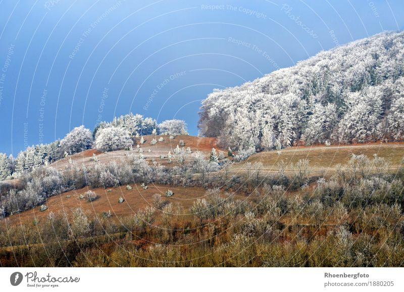 Der erste Frost Ferien & Urlaub & Reisen Tourismus Ausflug Winter Schnee Winterurlaub Berge u. Gebirge wandern Natur Landschaft Pflanze Wetter Schönes Wetter