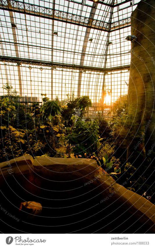 Happ New Year Sonnenaufgang Sonnenuntergang Halle Gewächshaus Glas Fensterscheibe Scheibe Glasscheibe Tropenhaus Urwald Brettwurzelbaum tropical island