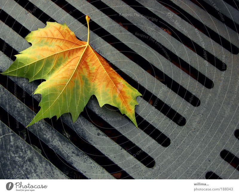 zwischen den zeilen... Blatt ruhig Einsamkeit Farbe Leben Herbst einzigartig Vergänglichkeit Ende Strukturen & Formen Typographie verlieren Gully Entwurf Ahorn Zeile