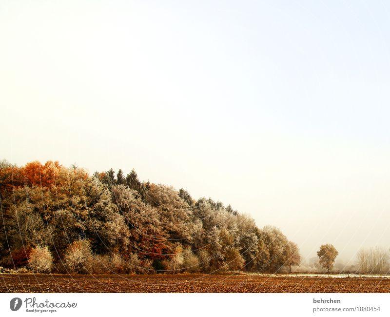 durchatmen Himmel Natur Pflanze schön Baum Landschaft Blatt Winter Wald kalt Herbst Schönes Wetter