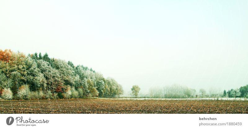 winterlicher herbst Natur Landschaft Pflanze Himmel Herbst Winter Eis Frost Schnee Baum Sträucher Feld Wald frieren kalt schön herbstlich Schneelandschaft
