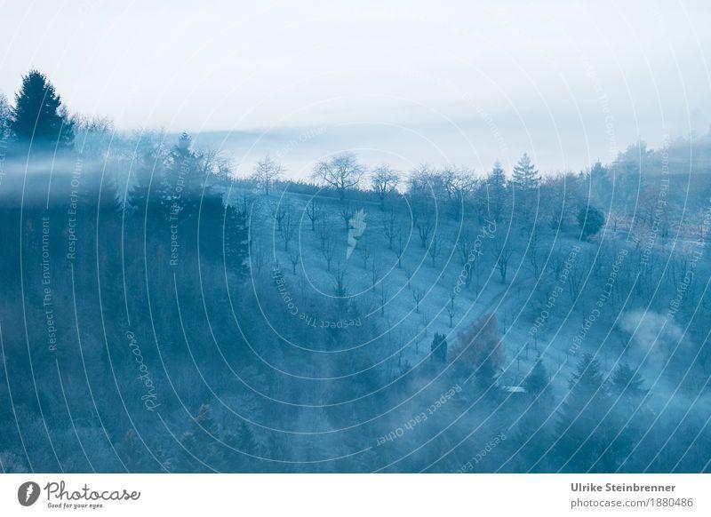 Frostiger Schwarzwald 3 Umwelt Natur Landschaft Pflanze Himmel Sonnenlicht Winter Klima Wetter Nebel Eis Baum Sträucher Nutzpflanze Tanne Obstbaum Feld Wald