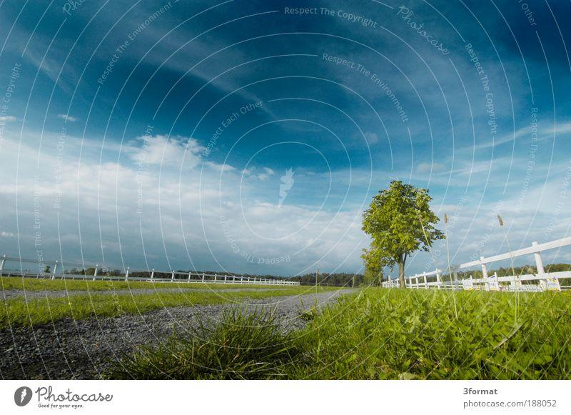 PFERDEKOPPEL Natur weiß Sommer Ferien & Urlaub & Reisen Ferne Wiese Landschaft Feld Wetter Ausflug Rasen Unendlichkeit Weide Schönes Wetter Tag Reiten
