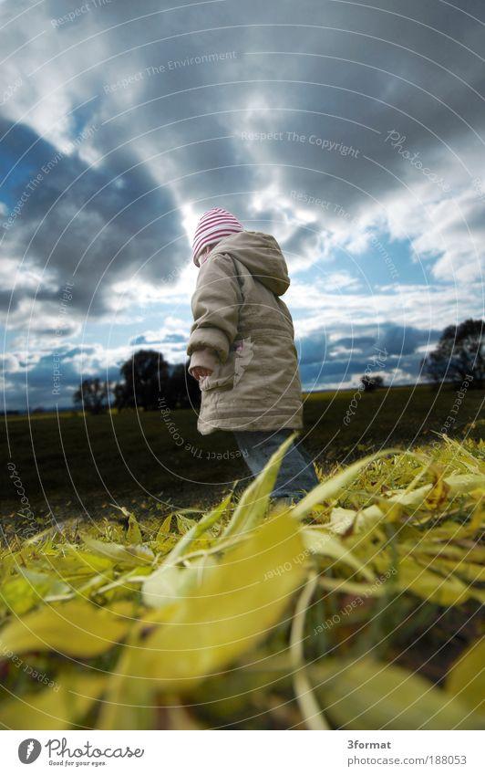 GIGANT Kind Jugendliche Mädchen Himmel Baum Blatt Wolken dunkel Herbst Gras Mensch Natur Landschaft leer Zukunft stehen