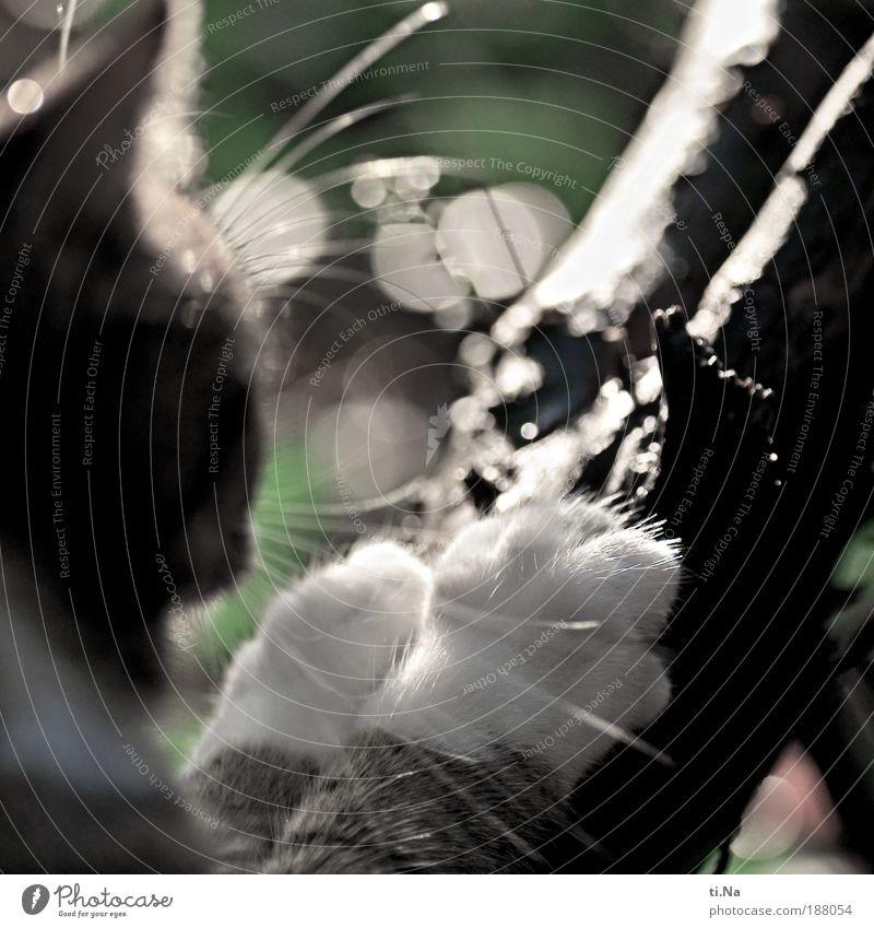 noch nicht scharf genug Katze Natur Pflanze grün schön Sommer weiß Sonne Landschaft Tier schwarz Umwelt Herbst Bewegung Garten außergewöhnlich