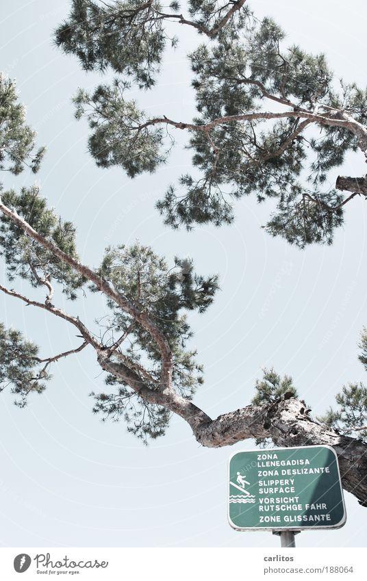 VORSICHT RUTSCHGE FAHR Himmel Baum grün Sommer Ferien & Urlaub & Reisen Bewegung Küste lustig laufen Tourismus Schriftzeichen bedrohlich Zeichen Hinweisschild Natur Sturz