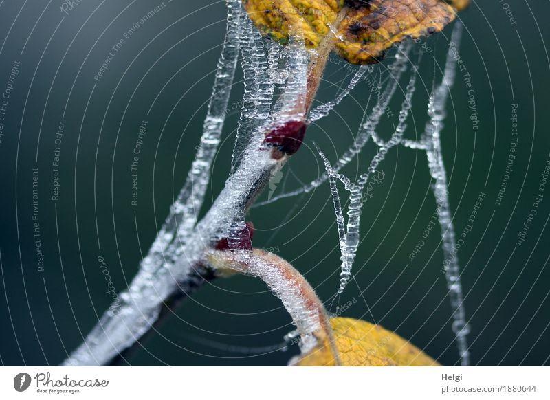 1400 | aufgebrezelt Umwelt Natur Pflanze Winter Eis Frost Blatt Stengel Wald alt festhalten frieren hängen dehydrieren außergewöhnlich einzigartig kalt klein