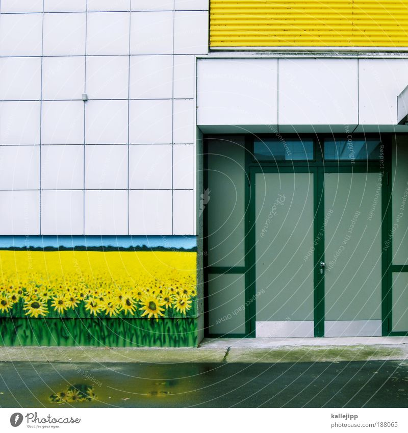 blühende landschaften Pflanze Blume Haus Umwelt gelb Wiese Fassade Feld Dekoration & Verzierung Gemälde Sonnenblume Grünpflanze Nutzpflanze Wildpflanze Kultur