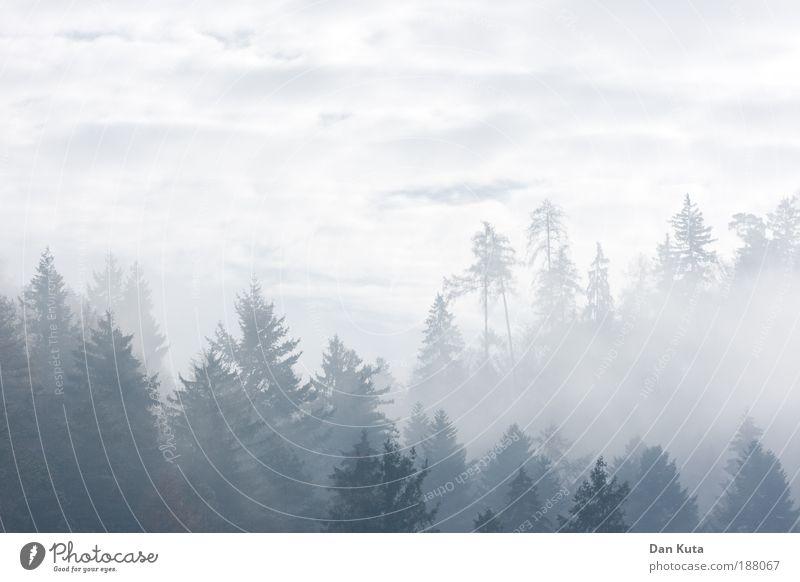 Kaltstart Himmel Baum Wolken Wald Herbst Umwelt Wachstum Zukunft weich fantastisch zart Hügel Vergangenheit Erzählung Wahrheit