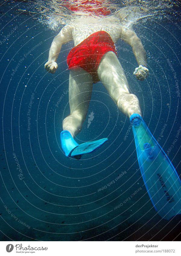 Blickrichtung Weisser Hai mit installierter Kopfkamera Mensch Ferien & Urlaub & Reisen Sommer Erwachsene Sport Beine Fuß Schwimmen & Baden Freizeit & Hobby