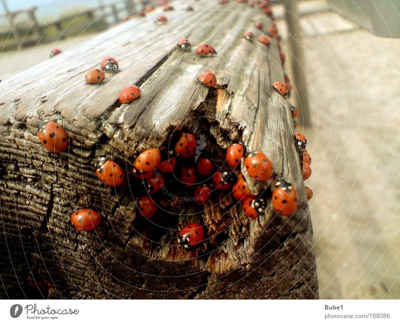 Massenhysterie Umwelt Natur Erde Sand Sommer Wetter Schönes Wetter Wärme Küste Ostsee Erholung krabbeln Freundlichkeit Fröhlichkeit rot schwarz weiß Gefühle