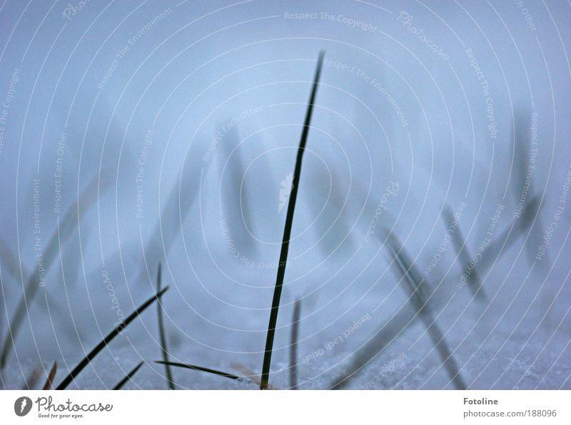 Das letzte Grün Umwelt Natur Landschaft Pflanze Urelemente Erde Wasser Winter Klima Wetter Eis Frost Schnee Gras Garten Park Wiese Coolness einfach kalt nah