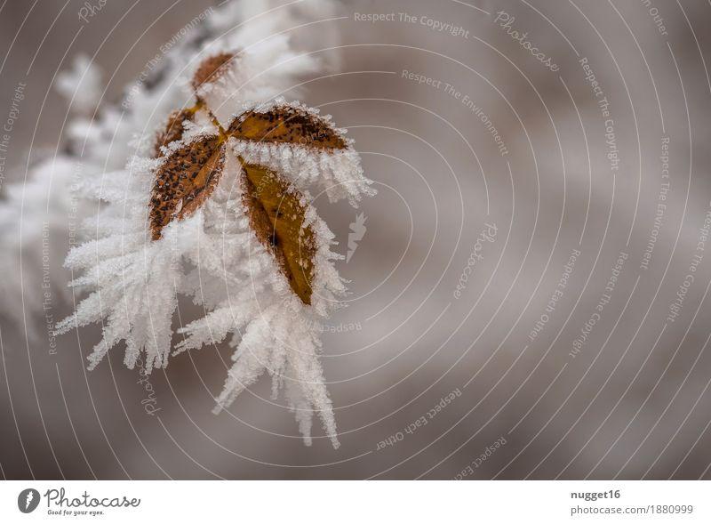 frozen Umwelt Natur Pflanze Urelemente Wasser Winter Klima Klimawandel Nebel Eis Frost Schnee Schneefall Baum Sträucher Blatt Wildpflanze Garten Park Feld Wald