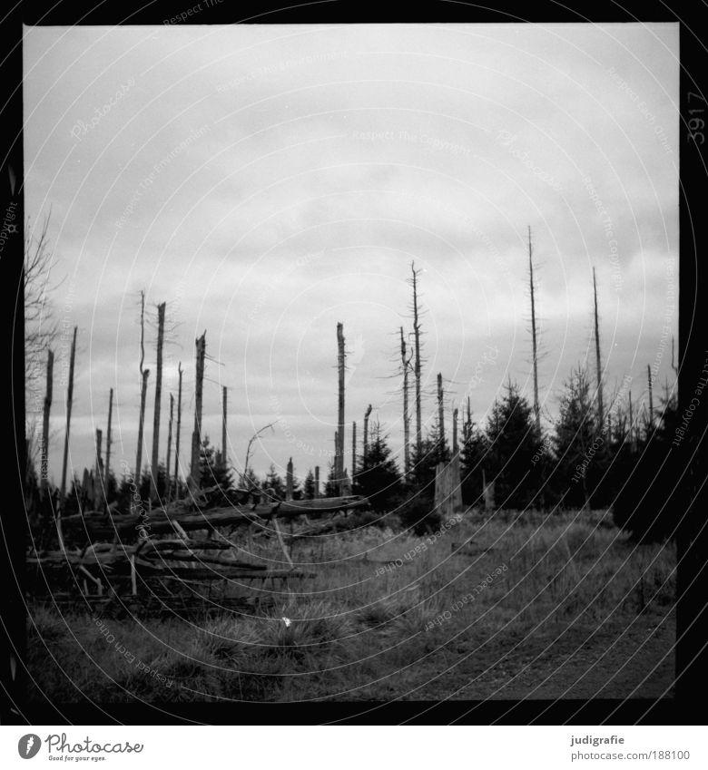Brocken Natur Himmel Baum Pflanze Wald dunkel Gras Berge u. Gebirge Landschaft Umwelt Wachstum bedrohlich Wandel & Veränderung Schwarzweißfoto Umweltverschmutzung dehydrieren