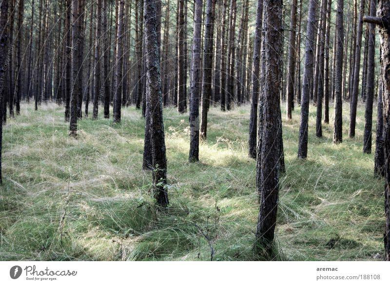 Waldesruh Umwelt Natur Landschaft Pflanze Sommer Herbst Baum Gras Wiese grün ruhig Farbfoto Gedeckte Farben Außenaufnahme Menschenleer Tag außergewöhnlich