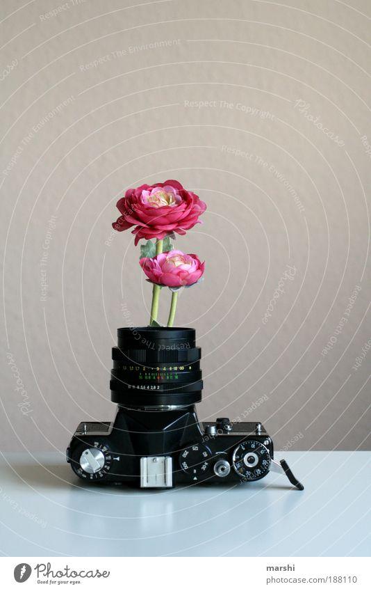 Ich will den Frühling! Stil Design Freizeit & Hobby Beruf Kunst alt analog Fotografie Fotografieren Blume Blumentopf Vase Rose Wildrosen Objektiv Blühend