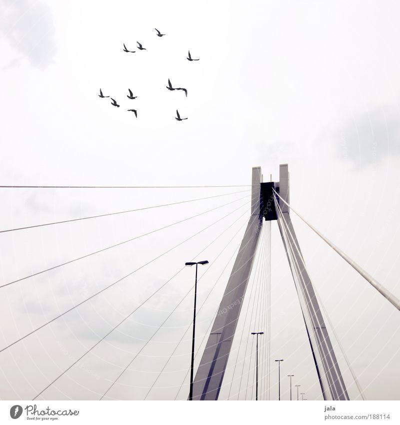 One day the birds will come back Himmel Menschenleer Brücke Bauwerk Architektur Verkehrswege Vogel Tiergruppe hell Laterne Wolken trist Gedeckte Farben