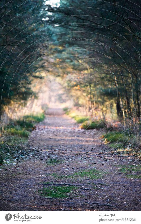 Ostseewald Natur Wald Wege & Pfade Kunst ästhetisch Fußweg Spaziergang Tanne Kunstwerk Allee Waldboden Waldlichtung Waldrand geradeaus weit