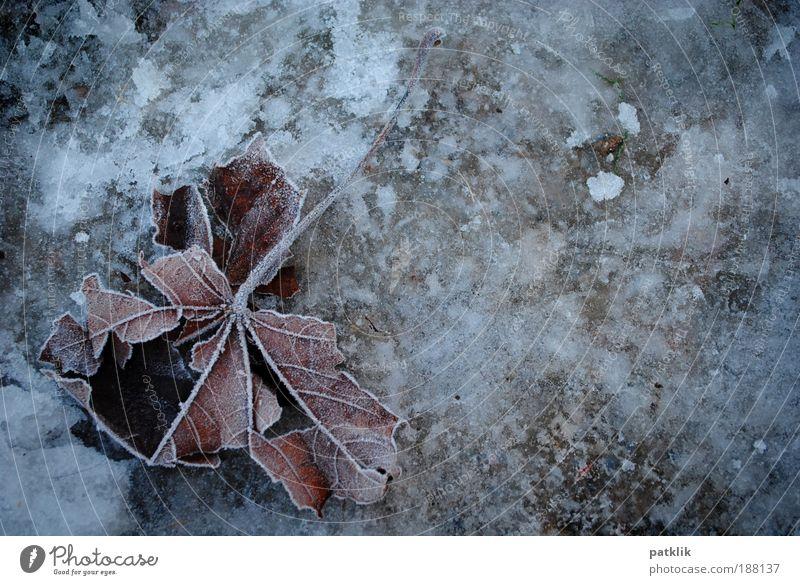 Frozen leaf Natur weiß Blatt Winter kalt Landschaft grau Traurigkeit Stimmung Park Wetter braun Eis Feld Erde liegen