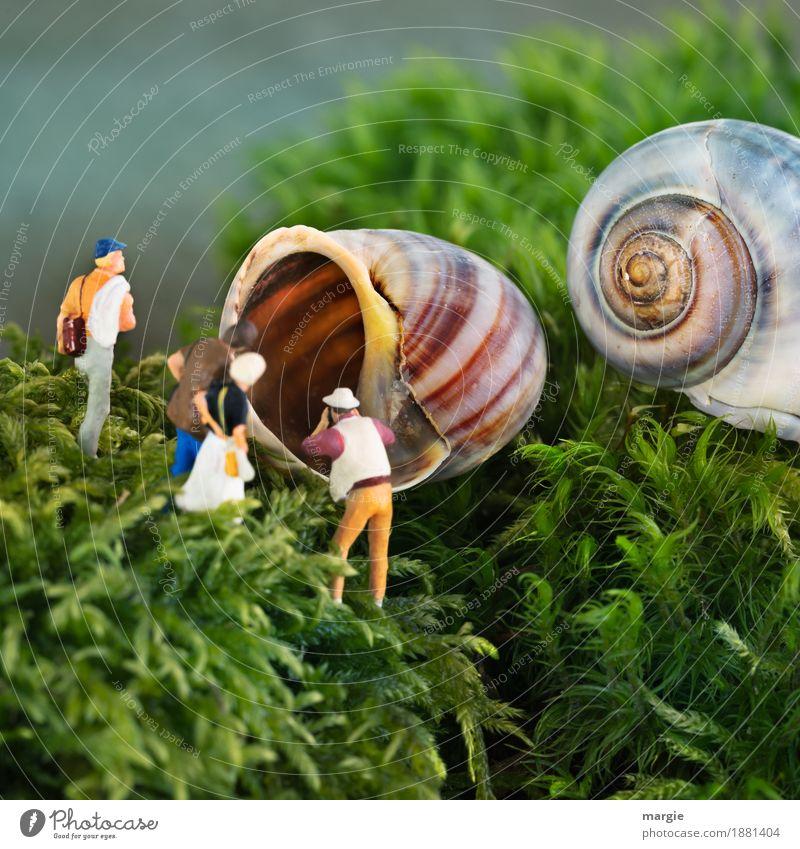 Miniwelten - Haus im grünen Besichtigung Mensch Frau Mann Pflanze Tier Erwachsene Gras feminin orange maskulin Moos Schnecke Grünpflanze Wildpflanze