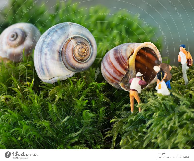 Miniwelten - Tag der offenen Tür Ferien & Urlaub & Reisen Tourismus Ausflug Wohnung Haus Traumhaus Garten Mensch maskulin feminin Frau Erwachsene Mann 4 Pflanze