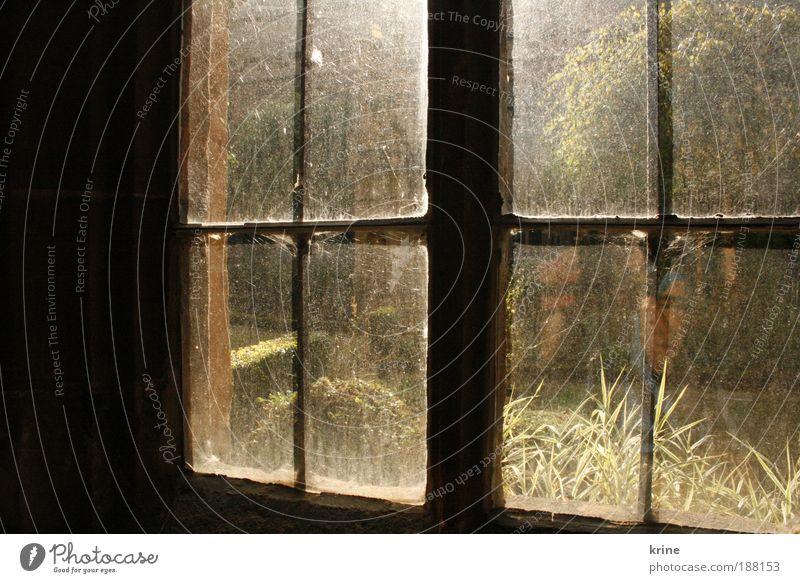 window ruhig Haus Einsamkeit Fenster träumen Hoffnung Zukunft Romantik beobachten Sehnsucht Neugier positiv Erwartung Glaube Lichtspiel aufwachen