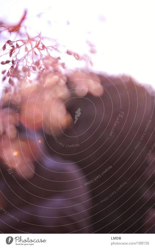 Gedanken Natur Himmel Sonne Blume ruhig grau Park rosa Energie Erde Sträucher Farbfoto Pflanze zart Gegenlicht Statue