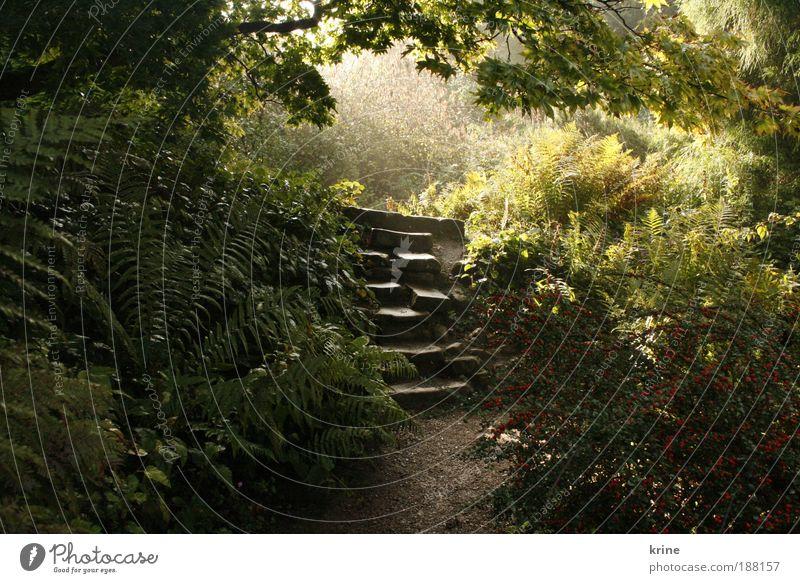 wonderland Natur Pflanze Sonne Sonnenaufgang Sonnenuntergang Sonnenlicht Schönes Wetter Sträucher Farn Wildpflanze Garten Park Wald leuchten exotisch