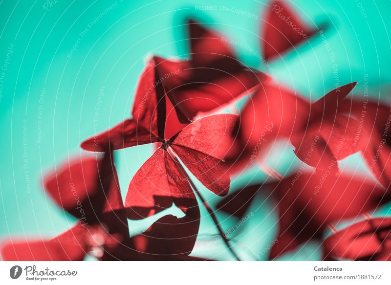 Roter Klee II Natur Pflanze rot Blatt Umwelt Glück Garten Wachstum ästhetisch einzigartig Wolkenloser Himmel türkis nachhaltig positiv achtsam